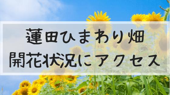 蓮田ひまわり畑,見頃,開花状況,混雑,アクセス,駐車場